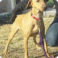 Adopt A Pet :: Peaches - Union City, TN