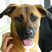 Adopt A Pet :: Katie Solis - Wakefield, RI