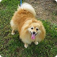 Adopt A Pet :: Bennie - Hesperus, CO