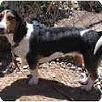 Adopt A Pet :: Cassie - Albuquerque, NM