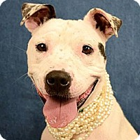Adopt A Pet :: Lilah - Lapeer, MI