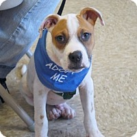 Adopt A Pet :: Wendell - Minneola, FL