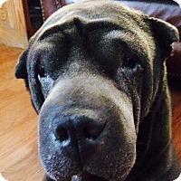 Adopt A Pet :: Mousse - Barnegat Light, NJ