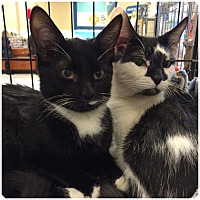 Adopt A Pet :: LEONARD - Hamilton, NJ