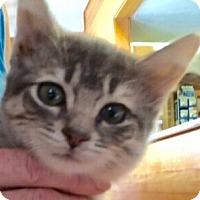 Adopt A Pet :: Bunnie - Modesto, CA
