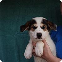 Adopt A Pet :: Bean - Oviedo, FL