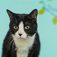 Adopt A Pet :: Momma Millie - Algonquin, IL