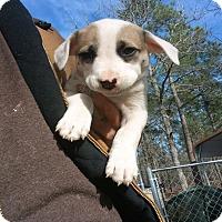 Adopt A Pet :: Bernadett - Girard, GA