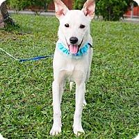 Adopt A Pet :: Saber - Castro Valley, CA
