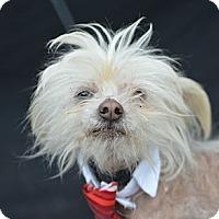 Adopt A Pet :: Mojo - Plano, TX