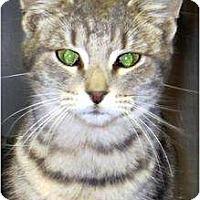 Adopt A Pet :: Tiger - Mobile, AL