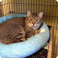 Adopt A Pet :: Jiggs - Medway, MA