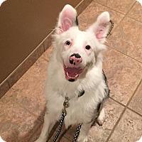 Adopt A Pet :: Polar Bear - Russellville, KY