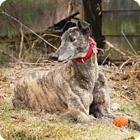 Adopt A Pet :: Zang - Ware, MA