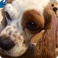 Adopt A Pet :: Reba June - Sugarland, TX