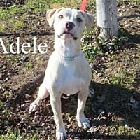 Adopt A Pet :: Adele - Warren, PA