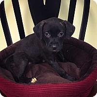 Hound (Unknown Type)/Boxer Mix Puppy for adoption in Woodstock, Georgia - SABRINA