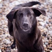 Adopt A Pet :: Jasper - Brattleboro, VT