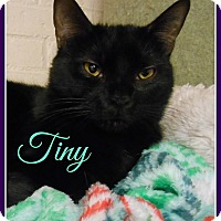 Adopt A Pet :: Tiny - Gonic, NH
