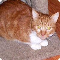 Adopt A Pet :: Bronx - Toronto, ON