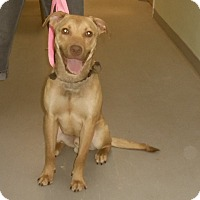 Adopt A Pet :: Lenny - St. Charles, IL