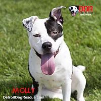 Adopt A Pet :: Molly - St. Clair Shores, MI