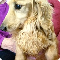 Adopt A Pet :: Hunter - Georgetown, KY