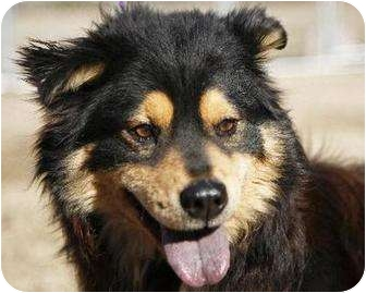 Chow Chow Mix Dog for adoption in Chesapeake, Virginia - BEN