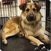 Adopt A Pet :: Rudy - Arlington, TX