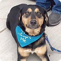 Adopt A Pet :: Luna - Knoxville, TN