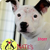 Adopt A Pet :: Star - Bradenton, FL