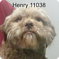 Adopt A Pet :: Henry - baltimore, MD