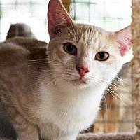 Adopt A Pet :: Fred - Odessa, FL