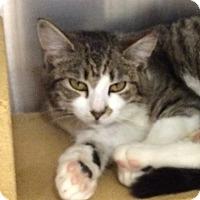 Adopt A Pet :: Lucy Ann - Colmar, PA