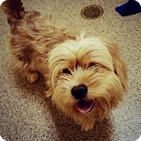 Adopt A Pet :: Alfie - Kennesaw, GA