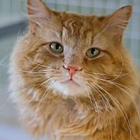 Adopt A Pet :: Neptune - Grayslake, IL