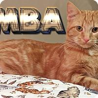 Adopt A Pet :: Simba - Toledo, OH