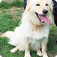 Adopt A Pet :: Natasha - BIRMINGHAM, AL