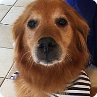 Adopt A Pet :: Charlie V - BIRMINGHAM, AL
