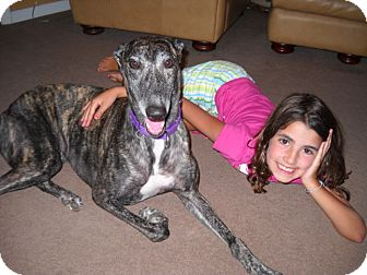 Greyhound Dog for adoption in Knoxville, Tennessee - Mystic