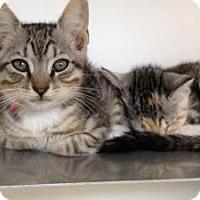 Adopt A Pet :: Louis & Lyla - Winter Haven, FL