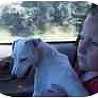 Adopt A Pet :: Lucky Lou in Conroe - Houston, TX