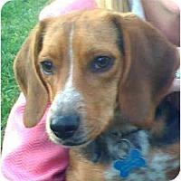 Adopt A Pet :: Max PENDING - Indianapolis, IN