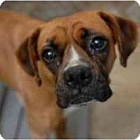 Adopt A Pet :: Suki - Navarre, FL
