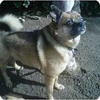 Adopt A Pet :: Maverick - Los Angeles, CA