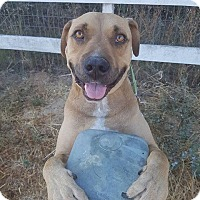Adopt A Pet :: Louie - Lompoc, CA