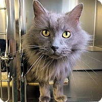 Adopt A Pet :: Thaddeus - Lunenburg, MA