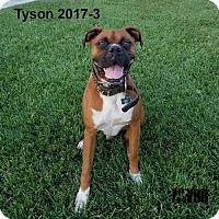 Adopt A Pet :: Tyson 2017-3 - Woodinville, WA