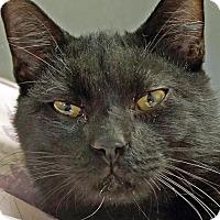 Adopt A Pet :: Mulcahey - Sprakers, NY