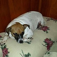 Adopt A Pet :: Anne - Wilmington, DE